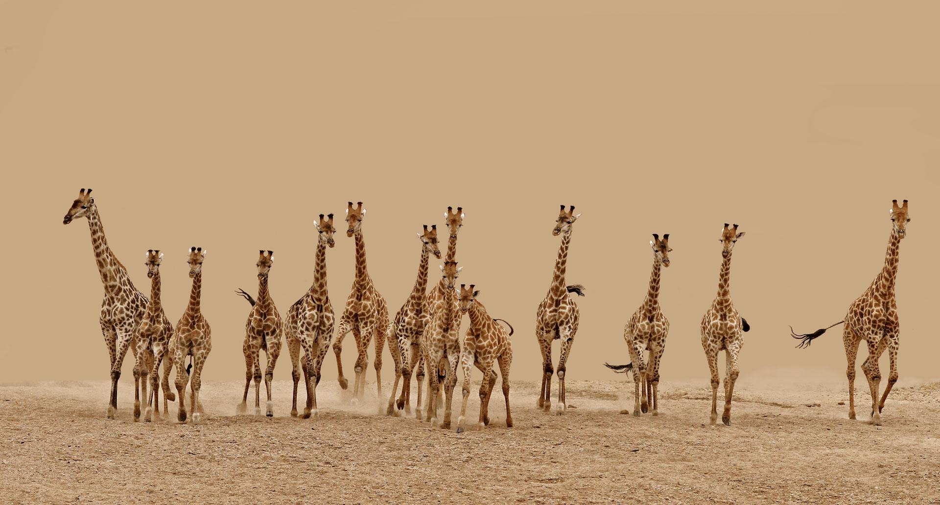 Frederick-van-Heerden-South-Africa-Shortlist-Nature-Wildlife-Open-Competition-2013_PRESS