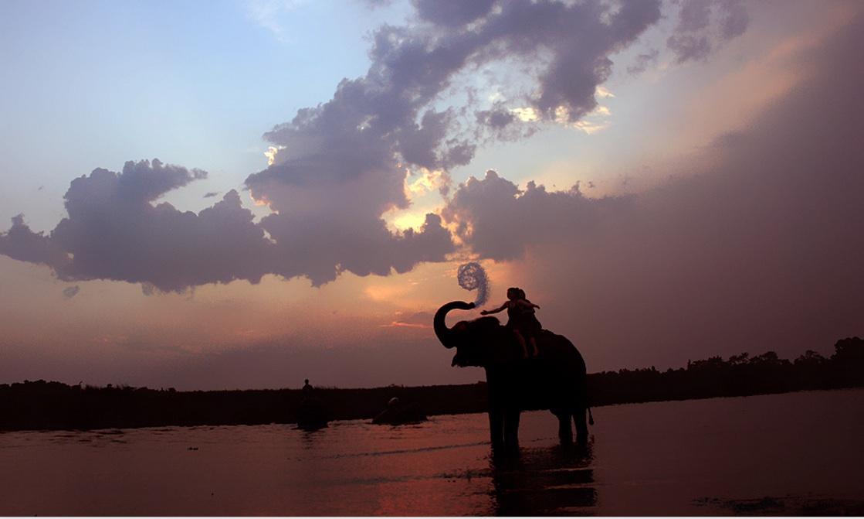 elephant at play