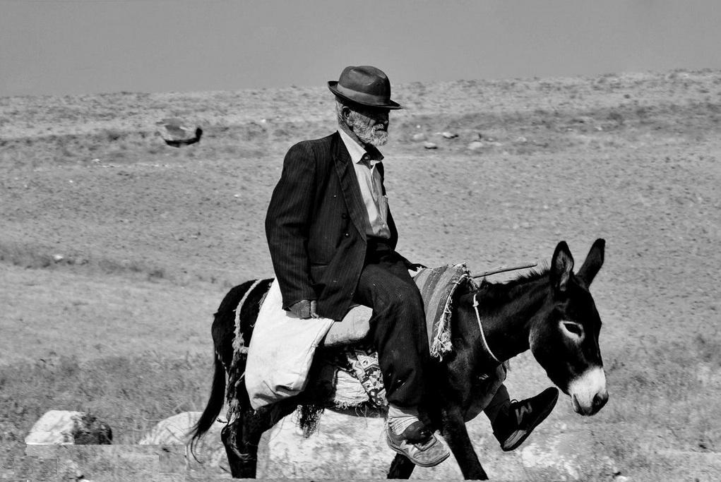 man and donkey